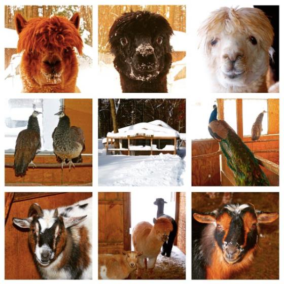 animals-11-14