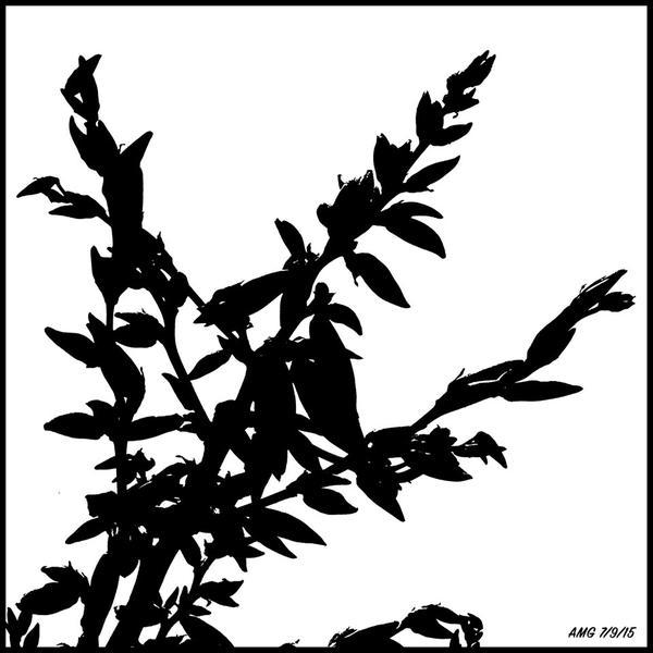 7.9 Black & white